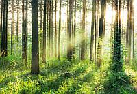 Фотообои флизелиновые на стену 366х254 см 8 листов: Закат в лесу  №964