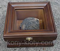 Киот для частички Мамврийского дуба ровный, из ольхи, с внутренней деревянной рамкой., фото 4