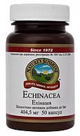Эхинацея Echinacea- капсулы,повышают сопротивляемость организма инфекционным и (50капс.,NSP,США)