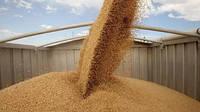 За февраль Украина экспортировала рекордный объем зерна