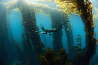 Рекомендации по выбору трубки для подводной охоты