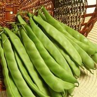 Семена фасоли Джина, May Seeds (Турция), упаковка 500 гр.