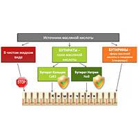 Стимулятор роста для птицы СМ-3000 (защищенный бутират натрия)