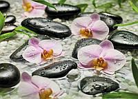 "Фотообои Komar ""Орхидеи""  Wellness 4-318"