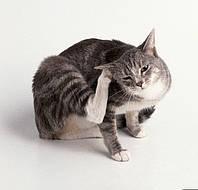Ветеринар Харьков (093)408-09-36 🐶 🐺 🐱 🐅Ушной клещ