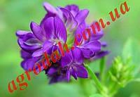 Семена Люцерны Ласка высшей категории