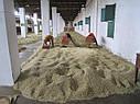 Арабика индия мансурд малабар, фото 3