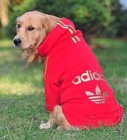 Спортивные толстовки Adidas и NIKE для собак крупных пород. Одежда для собак.