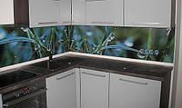 Купить кухонный фартук из закаленного стекла.