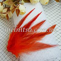 """Перья  """"под фазана"""", красно-оранжевые,  10-15 см"""