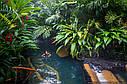 ЗЕРНОВОЙКОФЯАрабика Коста Рика, фото 2