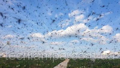 Несколько спасительных способов от комаров на отдыхе