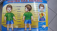 """НП Плакат (школа) """"Світ Поздоровлень А2""""/будова тіла людини"""