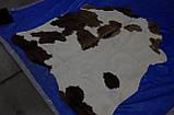 Экзотические шкуры коров в Украине, фото 3