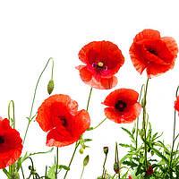 Вышивка бисером - Цветок