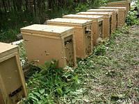 Пчелопакеты, порода пчел Карпатка