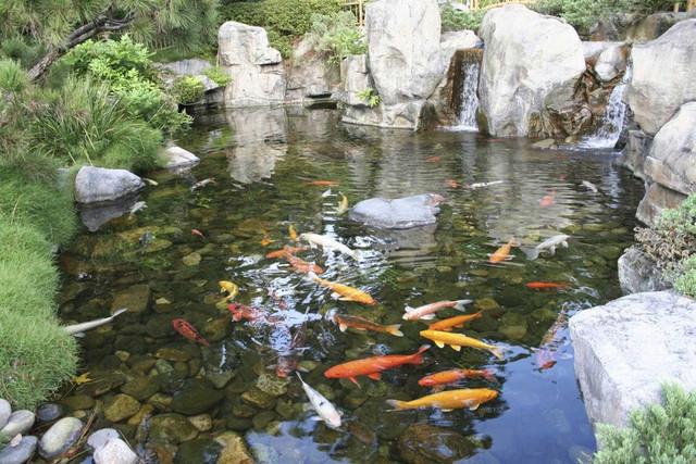 Товары для прудов и фонтанов