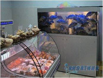 Торговые аквариумы Акватика для продажи карпа