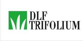 Насіння газонних трав Універсал DLF Trifolium