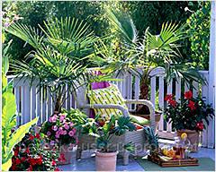 Комнатные растения в летнее время на открытом воздухе