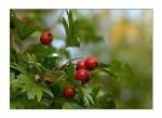 Свежие крымские травы бальзаированные медом