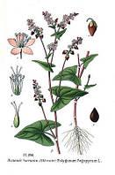 Семена кресцовых сидератов: горчица белая, сарептская, сурепка, рапс
