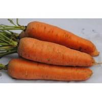 Семена моркови Курода Шантане, United Genetics (Италия), упаковка 500 гр.
