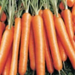 Семена моркови Нантес Скарлет, United Genetics (Италия), упаковка 500 гр.