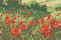Маки в цвету КМР 3245