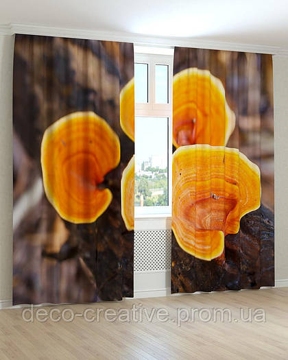 Фотошторы грибы на дереве