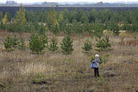 В Украине высажено 1264 га нового леса - Краснопольский