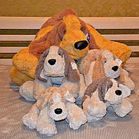 Собака Бассет 55-120 см