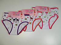 Трусы для девочки,3 шт. в упаковке одного размера,AURA.VIA разм. 2/4(3) лет, арт. GR 623,659, фото 1