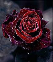 Алмазная вышивка Бархатная роза KLN 35*35 см (арт. FS122)