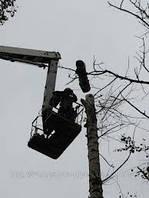 Обрезка деревьев в Киеве и пригороде. Обрезка веток