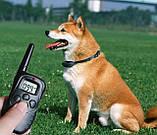 Електронний нашийник для тренування собак Dog Training, фото 6