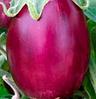 БЕАТА F1 - семена баклажана, 1 000 семян, SEMO