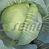 ОЛИМП - семена капусты белокочанной, 200 грамм, SEMO