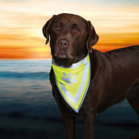 Косынка на шею собаки светоотражающая, XS/22-28см