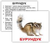 """""""Дикі тварини з фактами"""" МІНІ 40"""