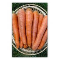 Семена моркови Фиго F1, Tezier (Франция), упаковка 25 000 семян