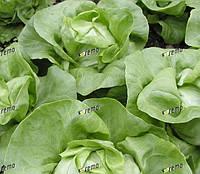 ЦИТРИН - семена салата тип Маслянистый, 1 000 семян, SEMO, фото 1