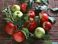 Не дня без яблок