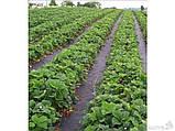 Картопля під агроволокно 50г/м. кв ширина 3.2 м, фото 2