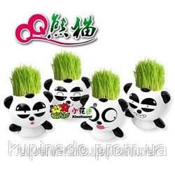 """Травянчик """"Панда"""", керамический горшочек настольный с семенами"""