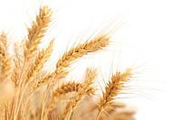 Микроудобрения для зерновых