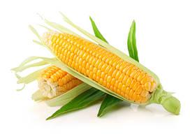 Микроудобрения для кукурузы и сорго