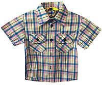 Детская рубашка на мальчика. 92-116 р.р. Голубая с розовым. Оптом.