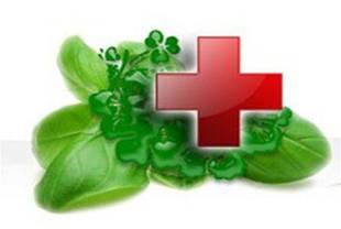 Фитоаптека, лекарственные растения.
