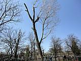 Кронирование спиливание деревьев, обрезка веток сада, фото 7